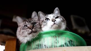 https://kagonekoshiro.com/blog-entry-19628.html かご猫Blog https://kagonekoshiro.com のせ猫オフィシャルブログ http://ameblo.jp/nosenekoshiro.