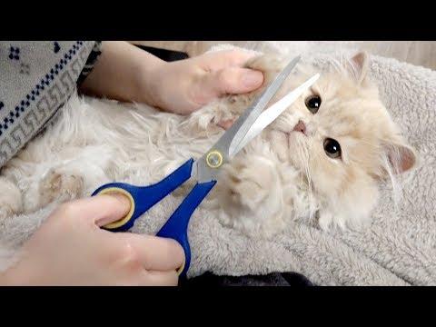 미용 첫경험! 꼬마고양이 요지 발털 자르기 | 김메주와고양이들