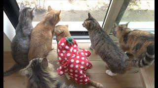 遊びに来た野鳥と猫