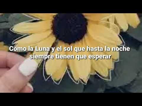 Girasoles Luis Fonsi Letra Youtube