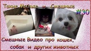 Смешные видео про кошек, собак и других животных. Такие Милые и Смешные # 30