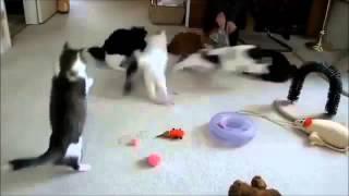 Коты   ржачные животные, видео приколы про собак онлайн
