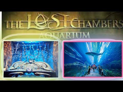 Dubai Atlantis Aquarium || the lost chambers aquarium
