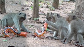 Super Funny Animal Videos - Funny Time With Monkeys At Angkor Monkey Forest