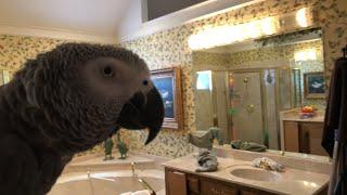Einstein Parrot LIVE 8 19 18