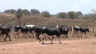 Especial Minas Gerais: a produção de leite