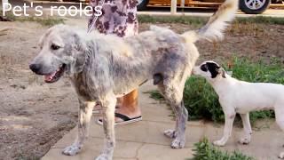 Saved dogs, cruelty to animals. stray dogs. Happy end. Спасение бездомных собак. Брошенные любимцы.
