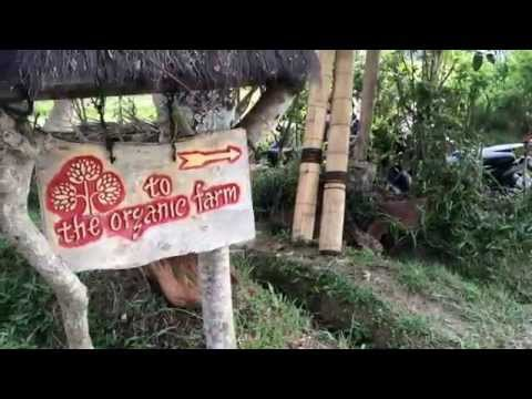 WHERE TO EAT HEALTHY IN BALI | SARI ORGANIC