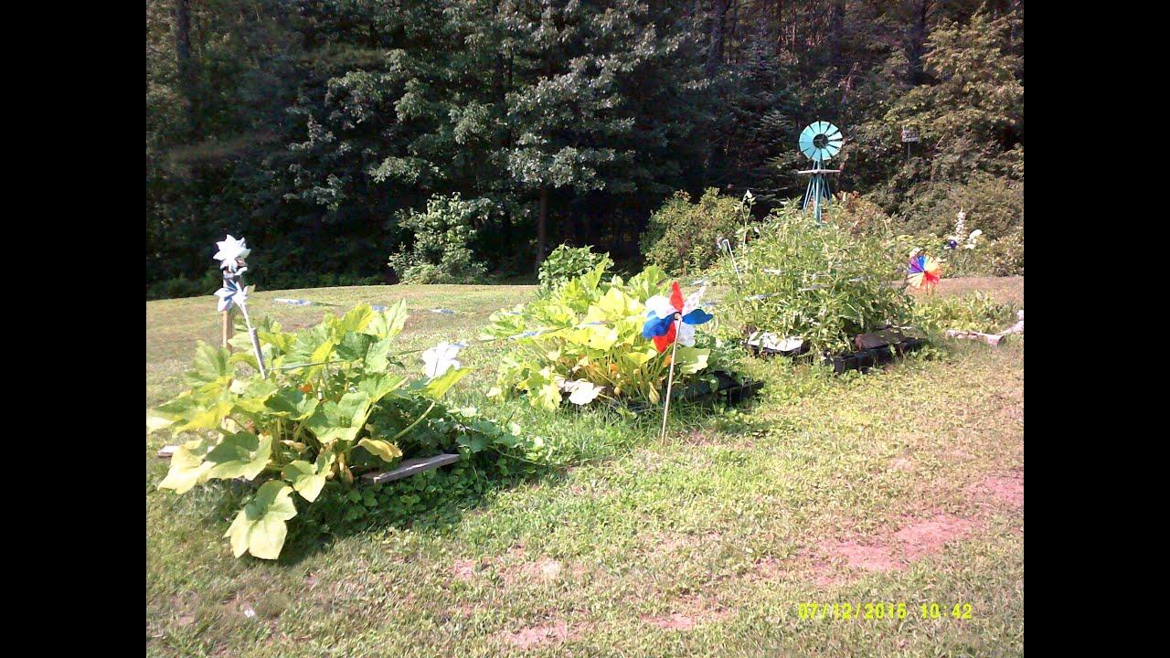 Growing Raised Bed Vegetable Garden Update July Zone 5