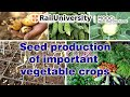 Techniques of seed production of important vegetable crops Part I