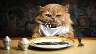 Ты мой миленький хорошенький мой котик Самое прикольное видео