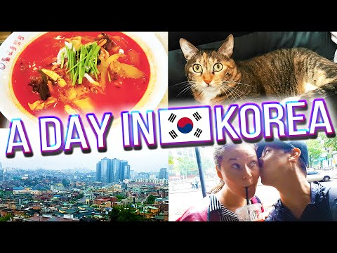 Flooding in Seoul, Meet Our Pets, and more - A DAY IN KOREA 🇰🇷 #1