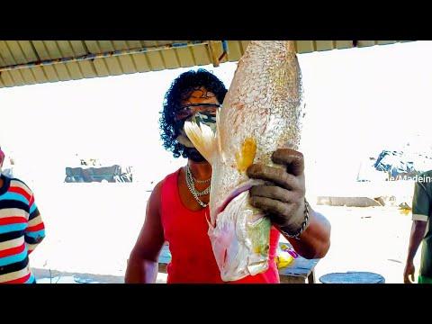cutting-sea-bass-fish-|-sea-food-sri-lanka