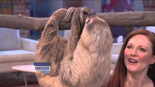 Anderson's Play Date with a Sloth