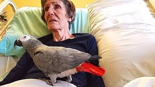 Dying Woman Says Goodbye to Her Parrot. The Bird's Answer Will Make You Cry!