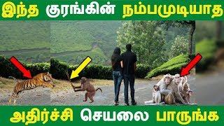 இந்த குரங்கின் நம்பமுடியாத அதிர்ச்சி செயலை பாருங்க | Tamil News | Tamil Seithigal