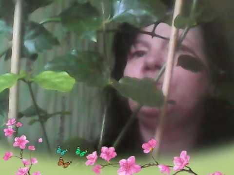 Жасмин комнатный (многоцветковый), секрет цветения.