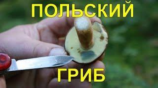Грибы.Польский гриб.Огород Баварский.