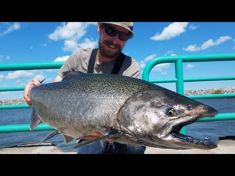 Lake Michigan Pier Fishing - King Salmon