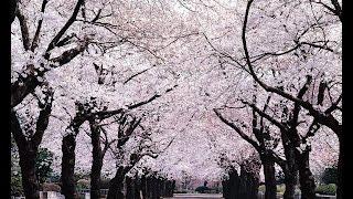 東京ラブストーリーの「ラブ・ストーリーは突然に」をオカリナで吹いて...