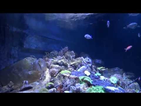 8 hrs aquarium screensaver full hd 50 fps relaxing aquatic sound