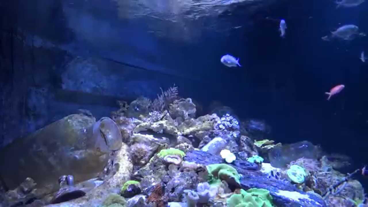 Aquarium screensaver for windows 10