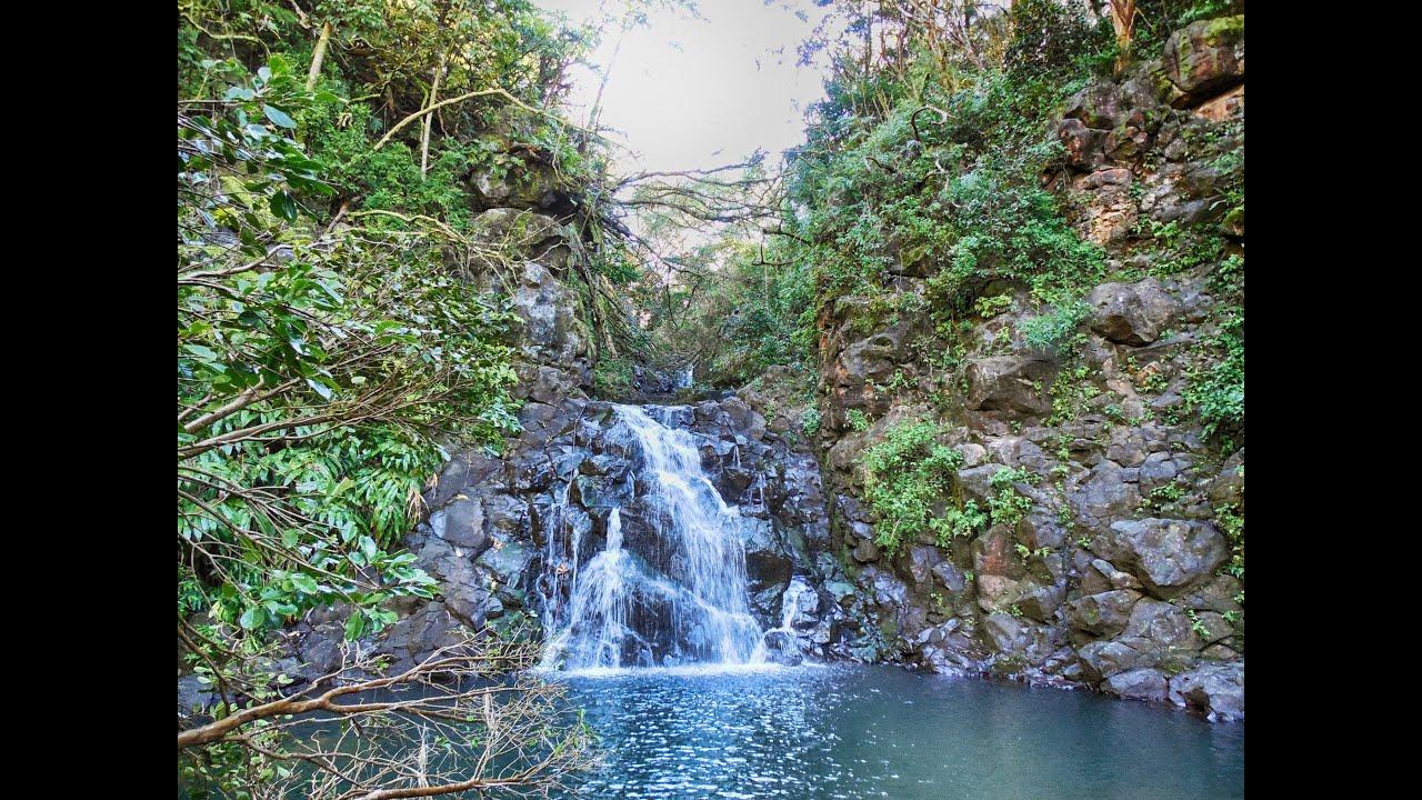 Tantalus Hike Maunalaha Trail To Tree Platform Oahu Hi You