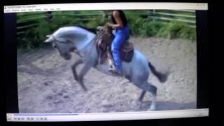 Horse Bucks For No Reason or For A Reason No One Sees  Most Horse Problems Are People Problems