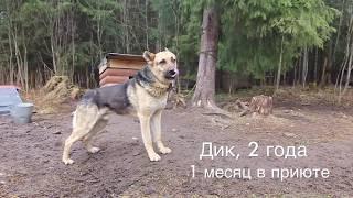 """Весёлый приют для животных """"Верность"""" в Санкт-Петербурге :)"""