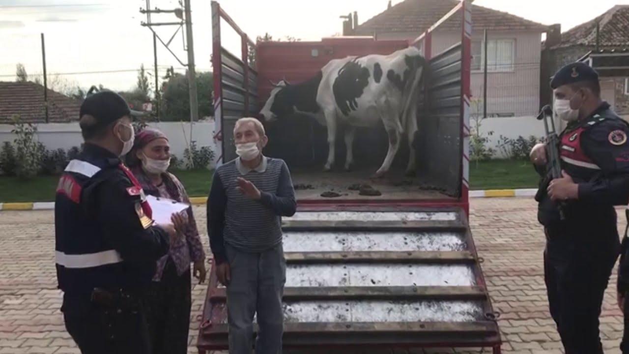 Çalınan inek, sahibine teslim edildi