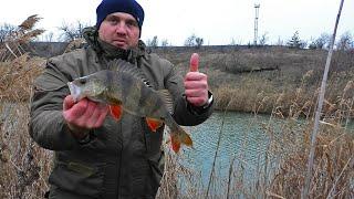 Зимнний спиннинг Пешком по берегу реки С такими окунями щук не нужно