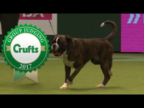 Working Group Judging and Presentation | Crufts 2017