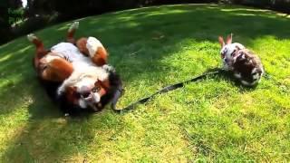LiKE Приколы / самые - лучшие - класные - лютые - четкие приколы про собак №25