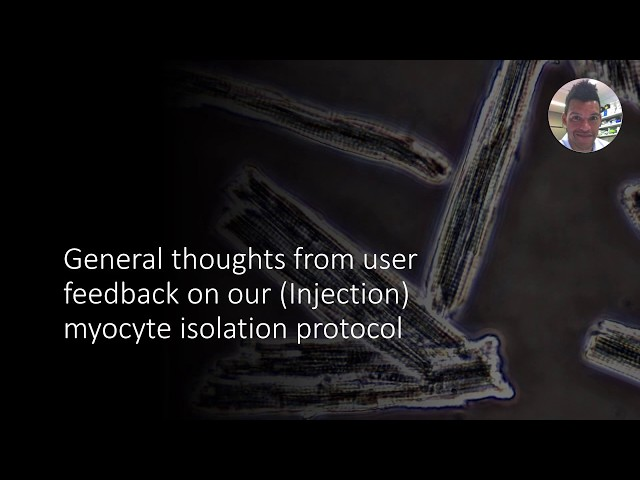 General tips and user feedback using the Langendorff-free method for cardiomyocyte isolation