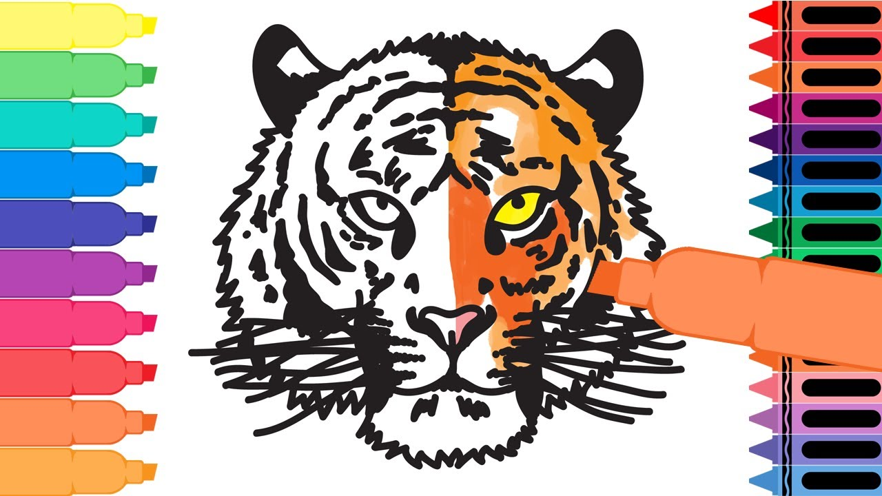 How to Draw a Tiger Head - drawing a tiger head - Coloring Pages animals  for Kids  Tanimated Toys