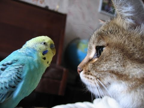 Super Purrrrsistent Parrot Tries To Involve Cat Into Conversation
