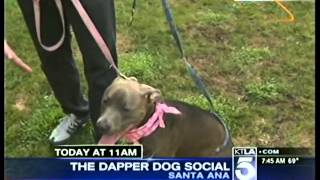 Ktla 5 Dog Training David Utter