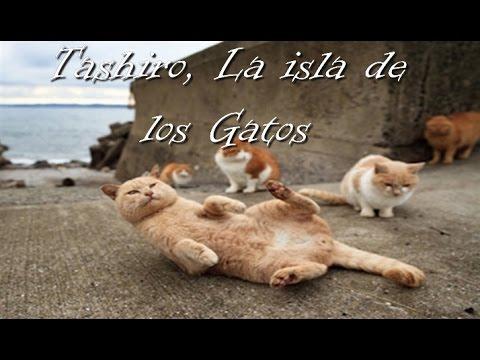 Tashiro, La isla de los Gatos