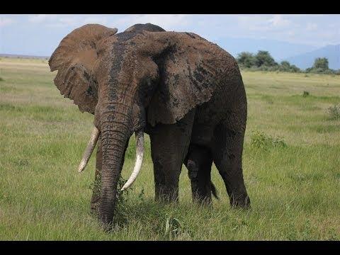 Tanzania Safari Tour, Lake Manyara National Park, Ngorongoro and Maasai - Wildlife