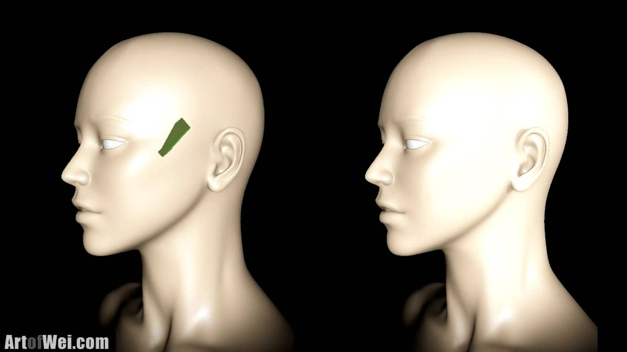 Face Lighting Reference - Female and Male Heads  sc 1 st  YouTube & Face Lighting Reference - Female and Male Heads - YouTube azcodes.com
