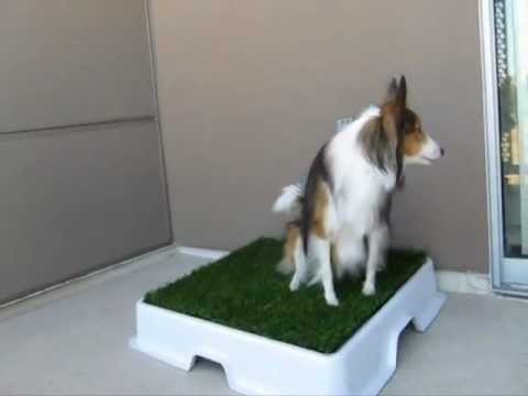 Puppy Potty training designed for apartments and condos - Urban Potty