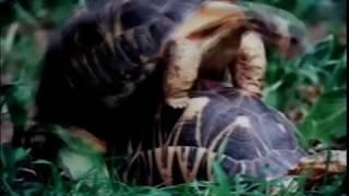 Секс диких животных
