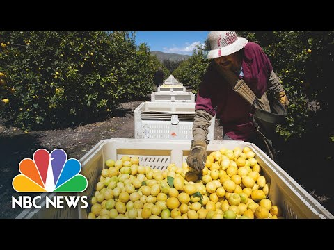 Farmworkers Push On