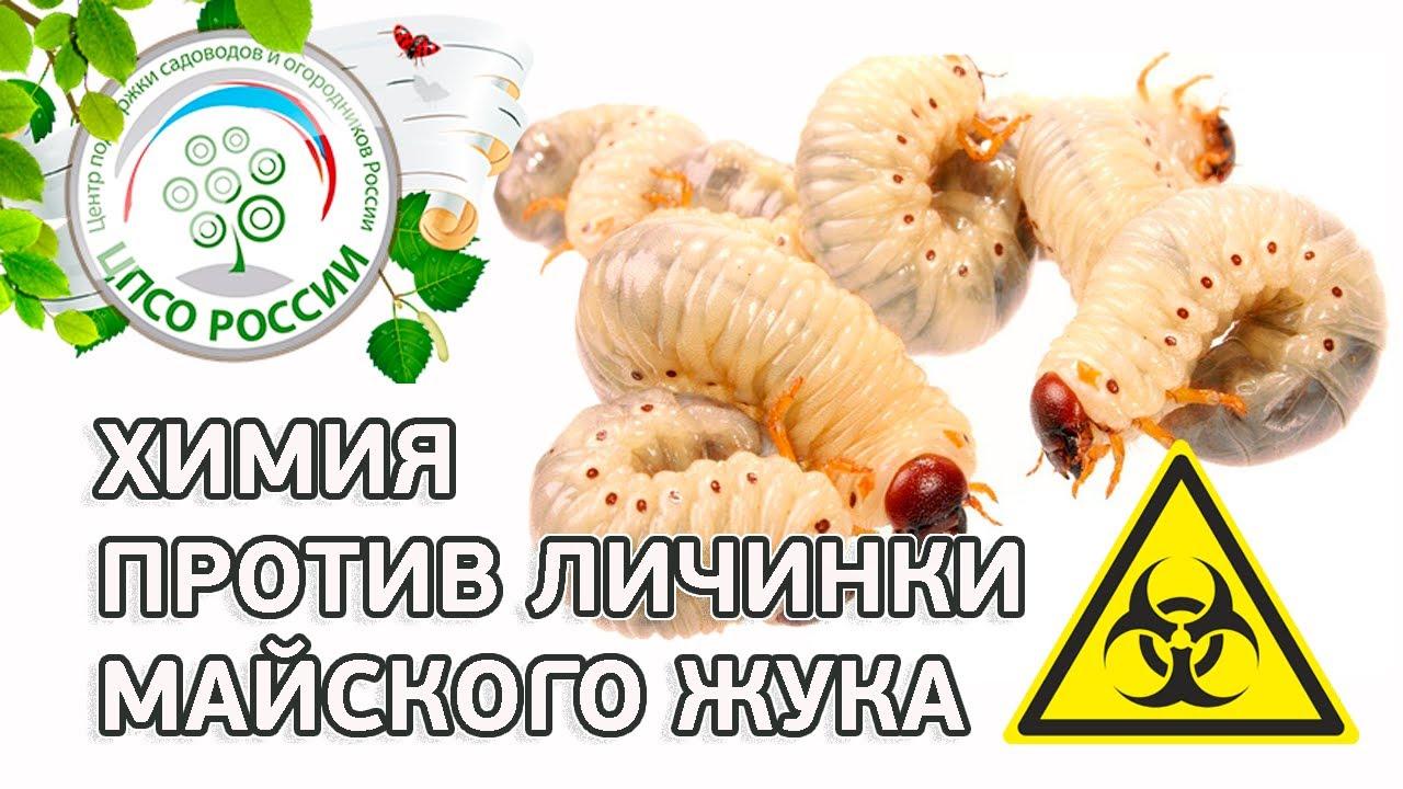 Средства от личинки майского жука. Химические средства борьбы с личинкой майского жука.