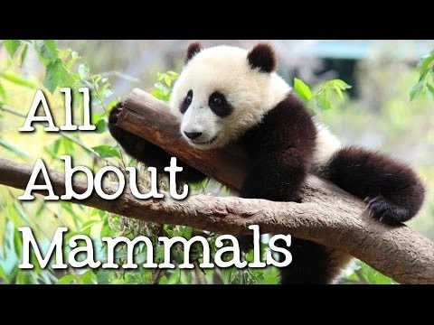 All About Mammals for Children: Cats, Bears, Elephants, Pandas and More - FreeSchool