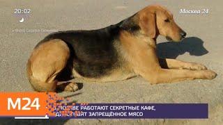 Смотреть видео В Москве работают нелегальные кафе, где готовят запрещенное мясо - Москва 24 онлайн