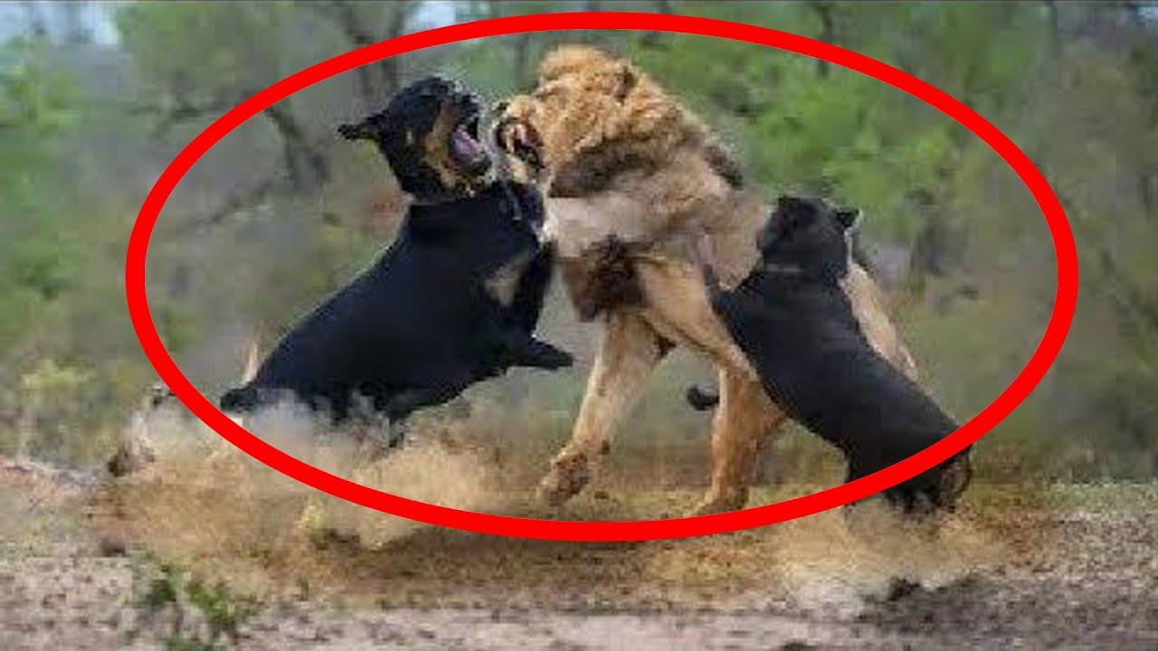 TOP Momentos de Perros Que Si No Hubieran Grabado Nadie los Creería