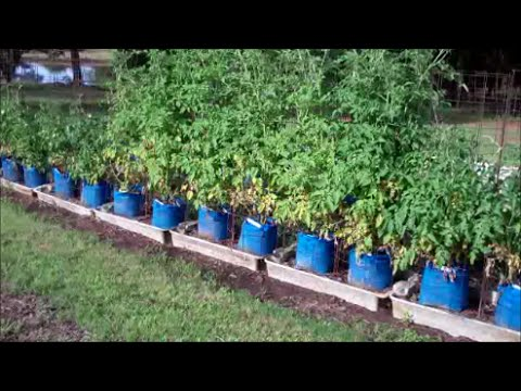 Larry Hall S Grow Bag System Part 3 Garden Update Youtube