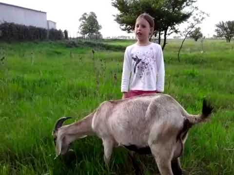 """Стихотворение С.Михалкова """"Как старик корову продавал"""""""