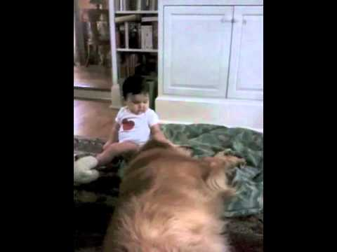 Cute Baby plays with Margaret Warner's Sweet Dog